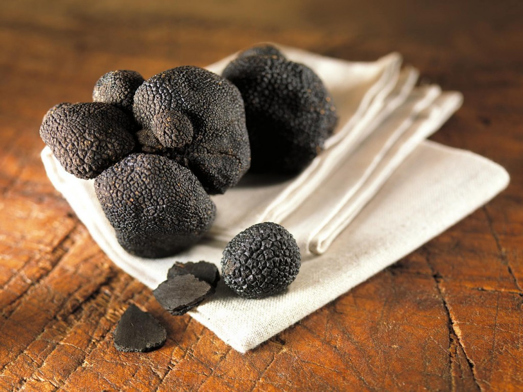 Truffes noire d'hiver fraîches